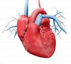قلب الإنسان يستطيع شم الروائح
