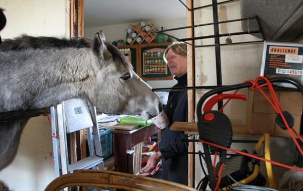 تقاسمت منزلها حصان فصادرته السلطات