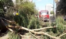الدفاع المدني: إزالة شجرة إثر سقوطها وسط الطريق العام في الجناح