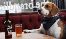 سكان قرية أميركية ينتخبون كلبا لرئاسة البلدية