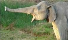 مكأفاة بـ33 ألف دولار لمن يدلي بمعلومات عن مطلق النار على فيل