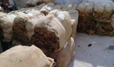 الريجي بدأت بتسلم محاصيل التبغ من المزارعين في الجنوب