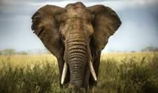 محكمة أميركية تنظر في أول دعوى قضائية من فيل ضد حديقة الحيوان