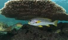 علماء الاحياء يرصدون تكيف المرجان مع تغيرات المناخ