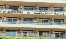 التفتيش المركزي ضبط مخالفات في وزارة الزراعة تمهيدا لتحديد المسؤوليات