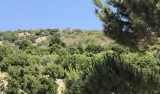 مخاتير ورؤساء بلديات قرى راشيا دعوا لمكافحة  انتشارحشرة جاذوب السنديان