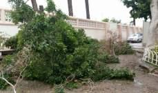 النشرة: الأمطار والرياح اقتلعت عمود كهرباء وشجرة بصيدا والأضرار مادية