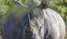 تحدت وحيد القرن من أجل إنقاذ هاتفها