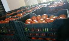ضبط 9 اطنان من البندورة السورية المهربة في سوق خضار قب الياس