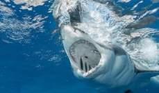 سمكة قرش تهاجم رجلا في مقتل