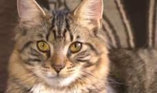 محكمة اميركية تلزم شرطة بدفع 50 دولار لامرأة تعرض قطها لاصابة