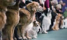 ضريبة على اقتناء الكلاب في بلدة اسبانية