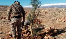 غرس أكثر من 500 شجرة في جرود عرسال