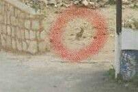 النشرة:مجموعة من الثعالب خرجت من اوكارها في الاودية المحيطة بالمروانية