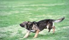 كلب عض مواطنة باجدعبرين والبلدية تناشد وزارة الصحة تأمين اللقاحات