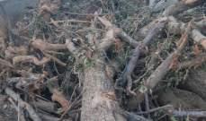 أهالي طفيل اشتكوا من أعمال جرف بساتين الأشجار المثمرة في البلدة