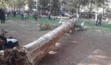 النشرة: سقوط شجرة معمرة في منتزه مرجة راس العين في بعلبك بسبب الرياح