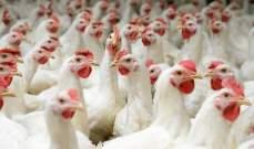 نقابة منتجي الدواجن: وزارة الزراعة لم تجد كوليستين في الدجاج اللبناني