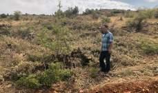 رئيس بلدية اليمونة: تعدي على الأحراج  وقطع الاشجار لاستعمالها للحطب