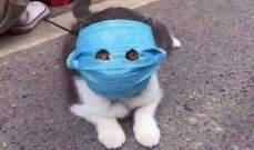 إصابة قط في هونغ كونغ بفيروس كورونا