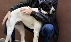 جنبلاط: اوقفوا هذه المجزرة بحق الكلاب  بحجة الوباء