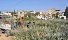 """""""البطاطا"""" اللبنانية تعاني على حدود الاردن: إما الحل القريب أو الكارثة"""