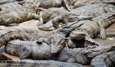 السلطات الأسترالية عجزت عن حث حوت أحدب على مغادرة نهر عكر شمال البلاد