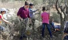 الحقول الجنوبية تنبض بالحيوية: موسم قطاف الزيتون ينطلق لكن الانتاج شحيح