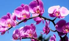 اكتشاف مركب نباتي لعلاج سرطان البروستات