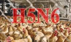السلطات البريطانية تكتشف بؤرة جديدة لإنفلونزا الطيور في أراضيها