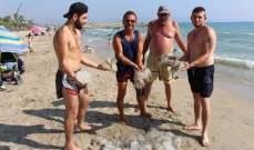 الآلاف من قناديل البحر تغزو شاطئ صور بسبب ارتفاع درجات الحرارة