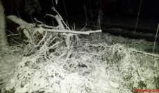 النشرة: سقوط شجرة في حومين التحتا جراء الرياح ادى لانقطاع الكهرباء