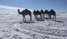 الثلوج تغطي مناطق الصحراء شمال السعودية