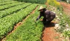 نائب رئيس نقابة حصر التبغ جال على المزارعين في قضاء بنت جبيل