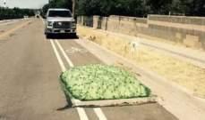 كتل خضراء على الطرقات ترعب السكان في اميركا