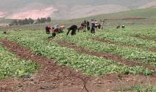 مزارعو البقاع: أنقذونا