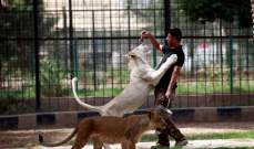 أسود ونمور عدي صدام حسين أرسلت الى محمية طبيعية في أربيل