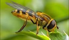 """فيروس """"الشلل الإسرائيلي"""" يصيب النحل ويحوله إلى """"زومبي"""""""