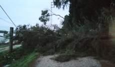 ارتفاع منسوب الانهار في عكار وسقوط شجرتين على طريق العمارة
