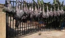 توقيف 3 أشخاص بجرم مخالفة قانون الصيد بحق طيور الرهو المهاجرة والمحظّر صيدها دوليا