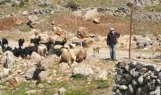 النشرة: دورية إسرائيلية خرقت خط الانسحاب وخطفت راعيين من شبعا