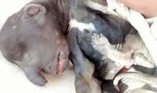 """جمعية """"Green Area"""" تطالب الدولة بالتحقيق بتسميم كلاب بمخيم نهر البارد"""