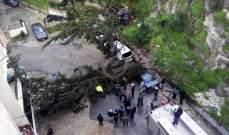 """النشرة: انهيار حائط وبعض الاشجار في حي """"كفرشوبا"""" على طريق المية ومية في صيدا"""