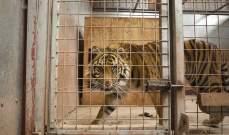 مطالبات بإقفال حديقة حيوانات وضع ساكنيها مذر جدا