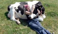 مزرعة في نيويورك تقيم جلسات عناق مع الحيوانات الكبيرة