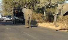 مقتل امرأة واصابة رجل إثر مهاجمة فيل لعدد من القرويين جنوبي الصين