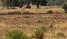 النشرة: قوة إسرائيلية مشطت الطريق العسكري ما بين تلال الوزانة ووادي العسل