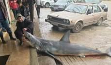 اصطياد سمكة قرش في بحر العبدة