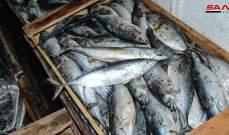 السلطات السورية: ضبط 7 أطنان من السمك الفاسد في اللاذقية