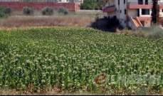 مزارعو التبغ في رميش والجوار ناشدوا المعنيين مساعدتهم بعد إصابة محاصيلهم باليباس